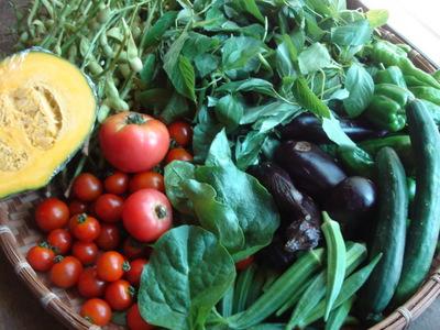080724野菜 003.jpg